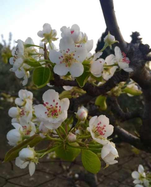 foto fiore 2