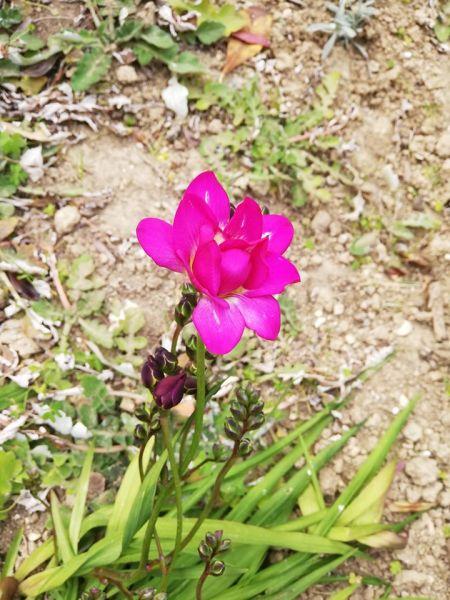 foto fiore